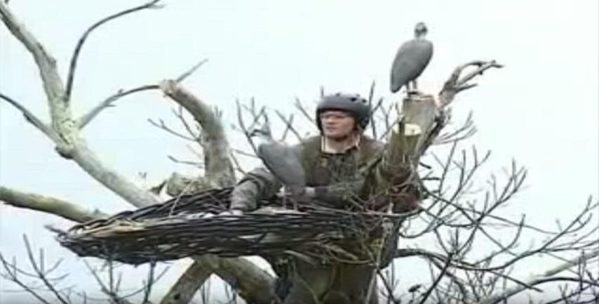 Ence apoya un proyecto en Doñana para la recuperación y protección del Águila Pescadora