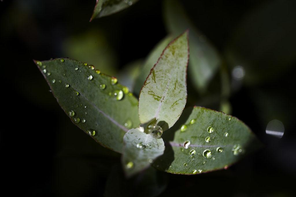 Ence refuerza la formación en sostenibilidad de su plantilla