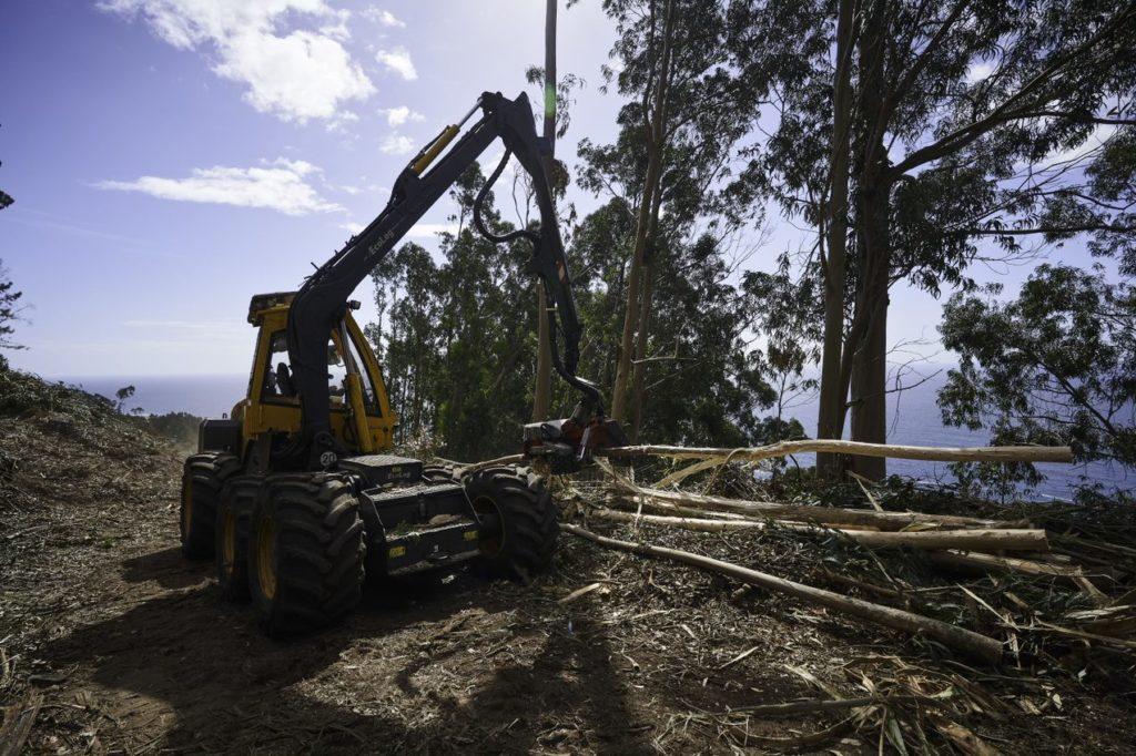 Ence promueve la formación de maquinistas forestales