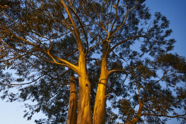 Ence renueva sus campañas para propietarios forestales hasta final de año